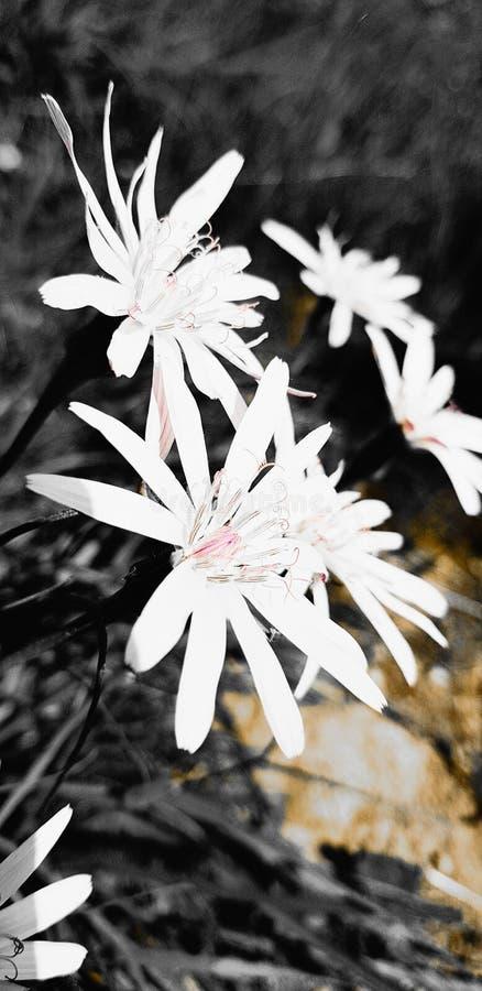 Flor de la montaña fotografía de archivo libre de regalías