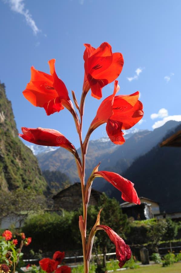 Flor de la montaña fotos de archivo libres de regalías