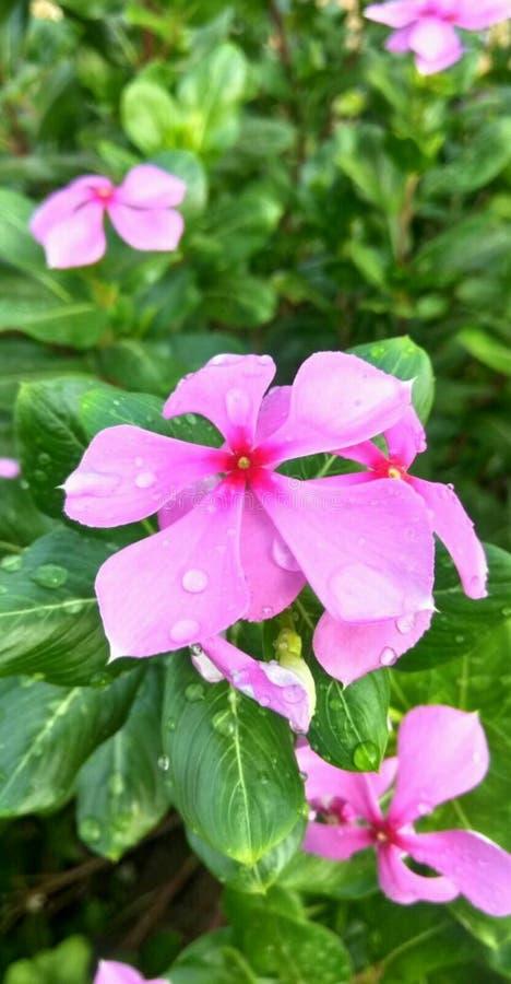 Flor de la naturaleza imágenes de archivo libres de regalías