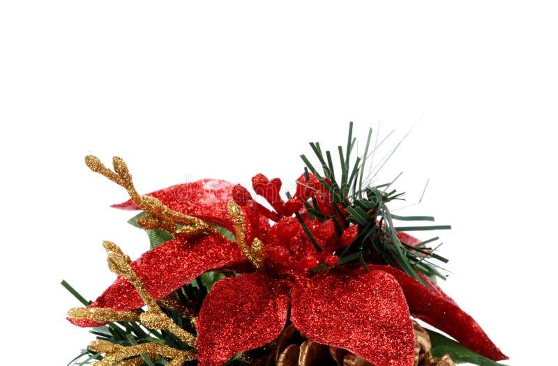 Flor de la Navidad foto de archivo libre de regalías