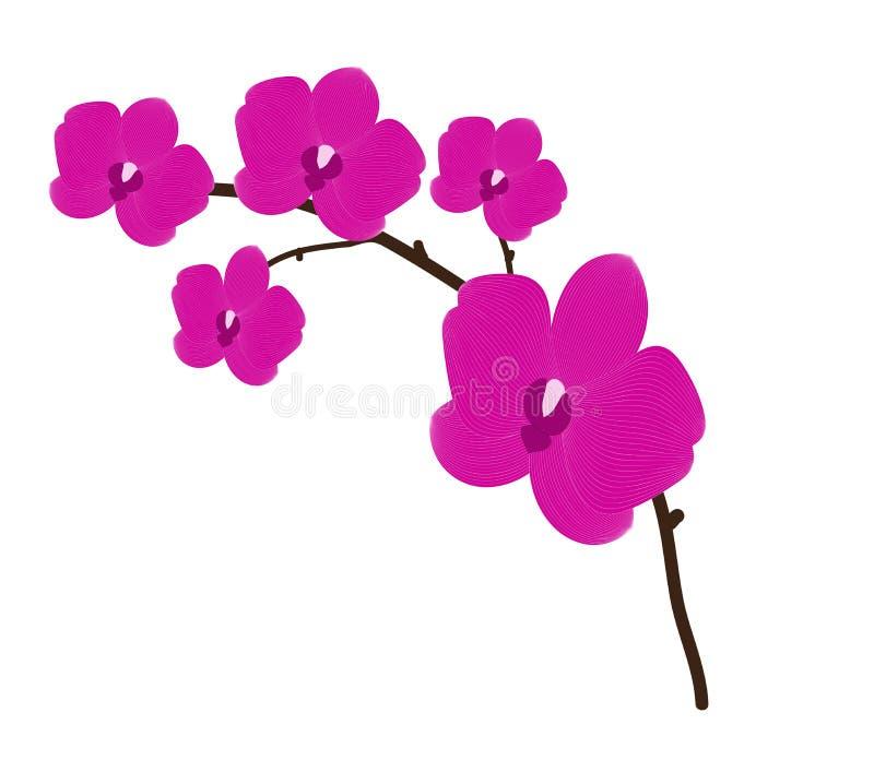 Flor de la orquídea ilustración del vector