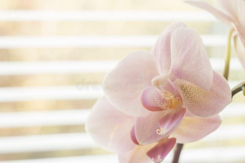 Flor de la orquídea cerca de una ventana imagenes de archivo