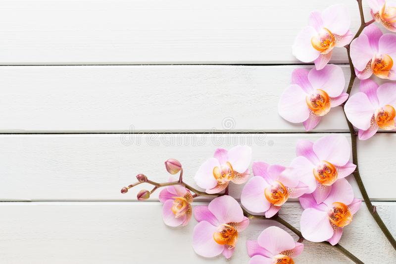 Flor de la orquídea en el fondo en colores pastel de madera Balneario y escena de la salud imagen de archivo