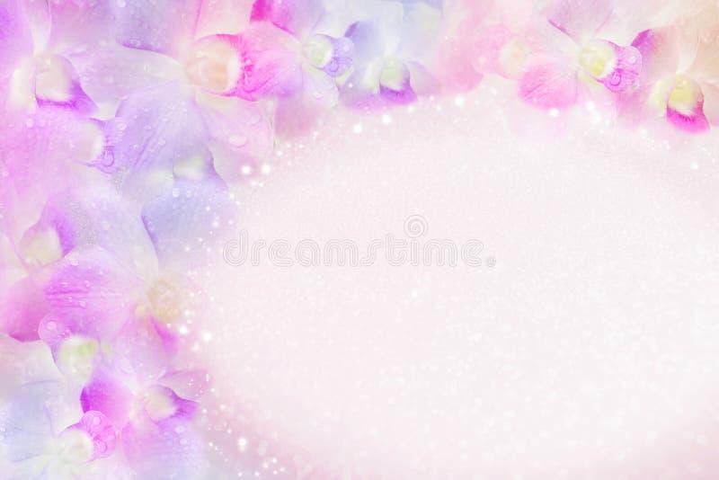Flor de la orquídea que florece en fondo en colores pastel suave del estilo con el espacio de la copia, idea para la tarjeta de l imagen de archivo