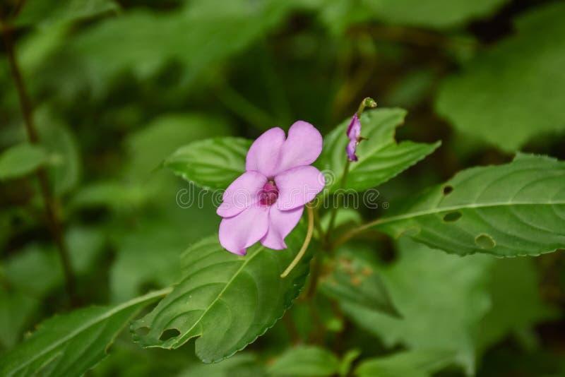 Flor de la púrpura de la belleza fotografía de archivo