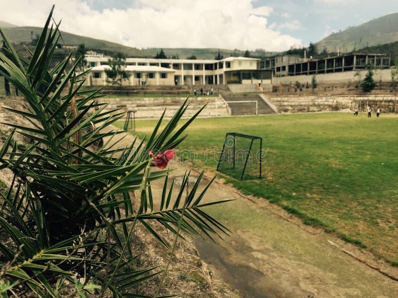 Flor de la palmera imagenes de archivo