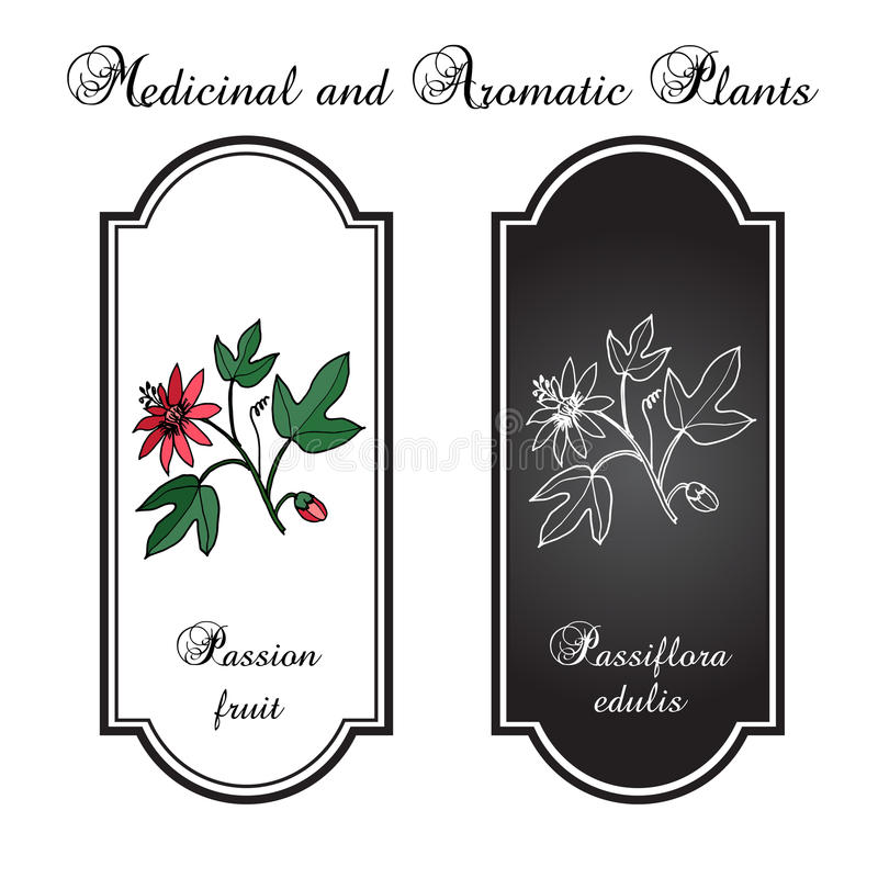 Flor de la pasión ilustración del vector