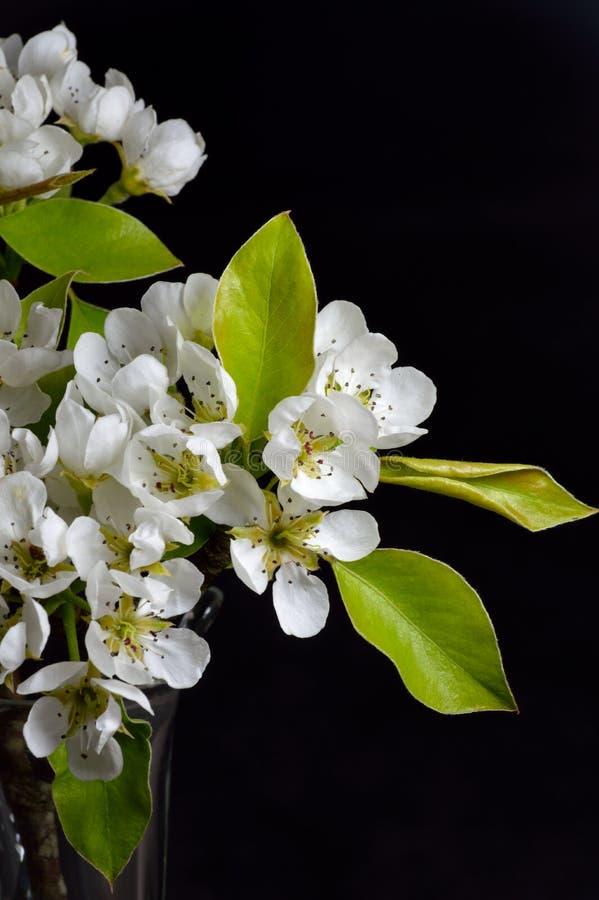 Flor de la pera imagen de archivo