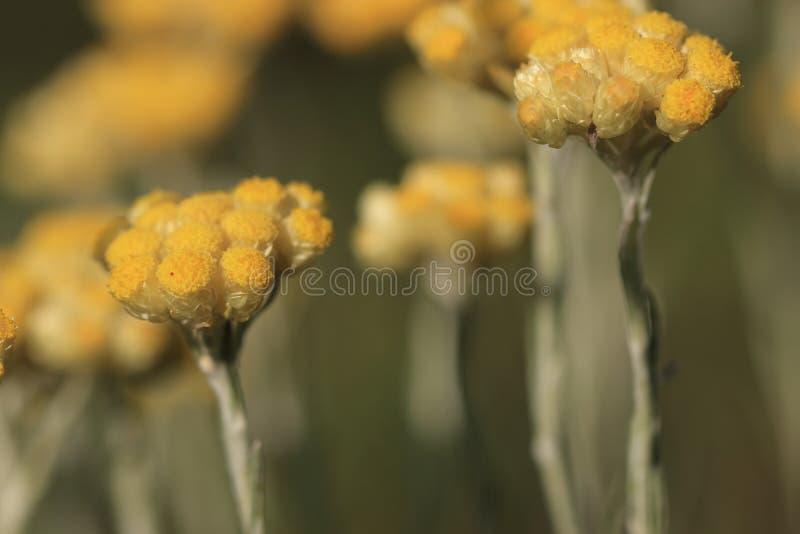 Flor de la planta del curry foto de archivo libre de regalías