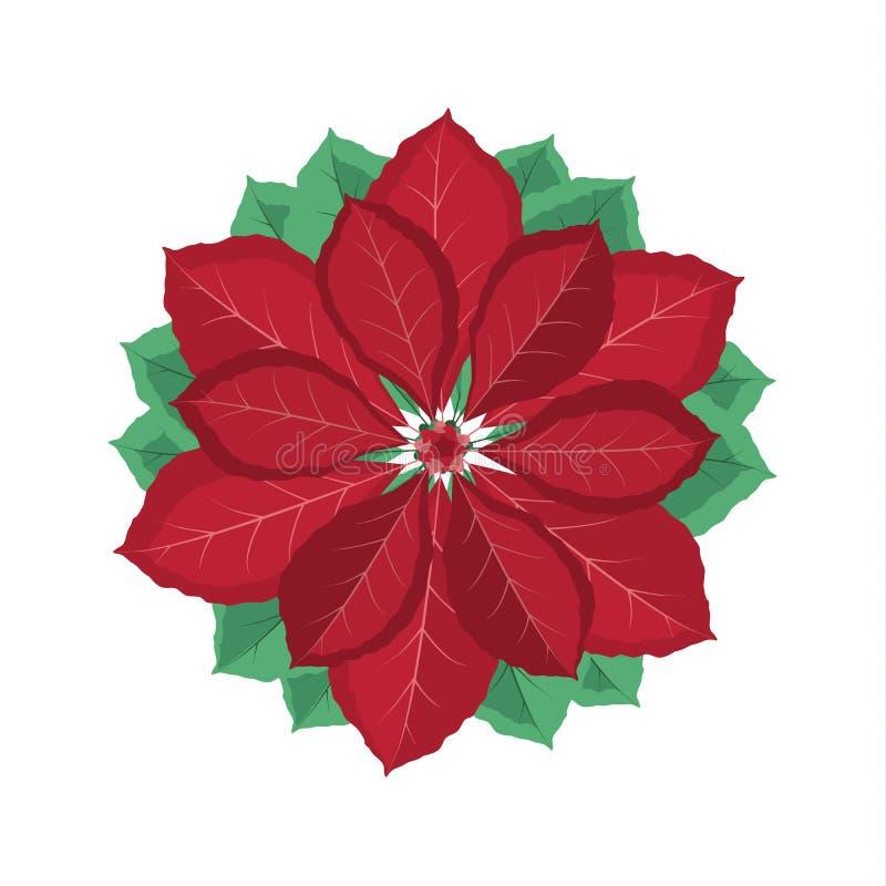 Download Flor De La Poinsetia De La Navidad Ilustración del Vector - Ilustración de celebración, elegancia: 100530464