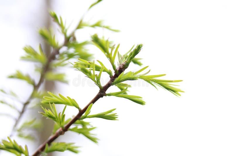Flor de la primavera fotografía de archivo