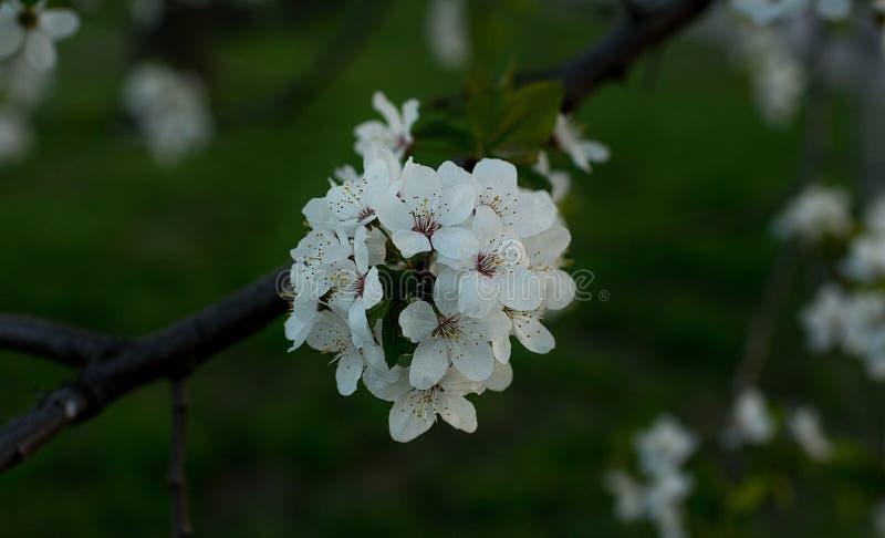 Flor de la primavera en fondo verde imagenes de archivo
