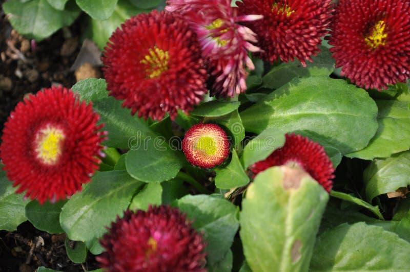 Flor de la primavera en Japón imagen de archivo libre de regalías