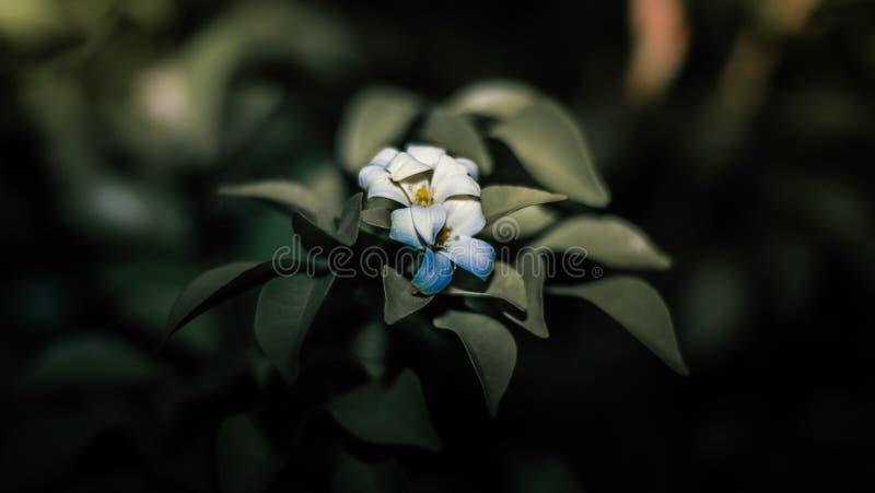 Flor de la puesta del sol imagen de archivo libre de regalías