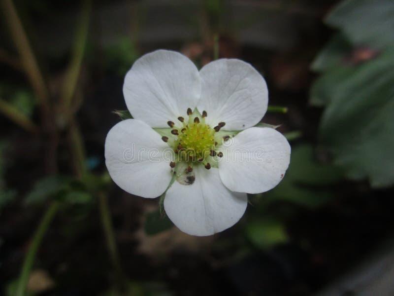 Flor de la tarde fotos de archivo libres de regalías