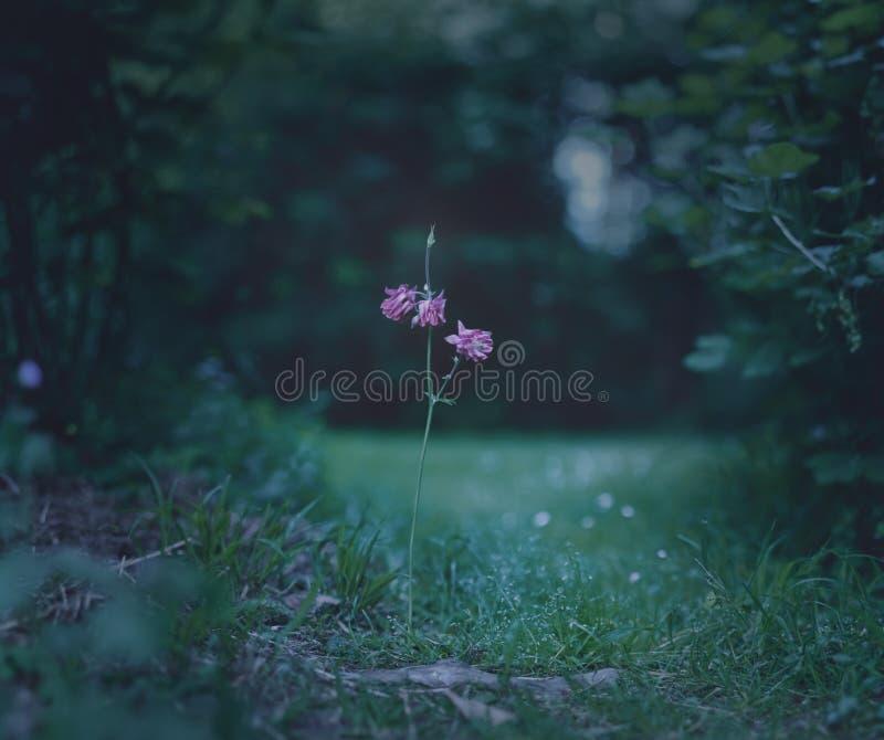 Flor de la trayectoria imagenes de archivo