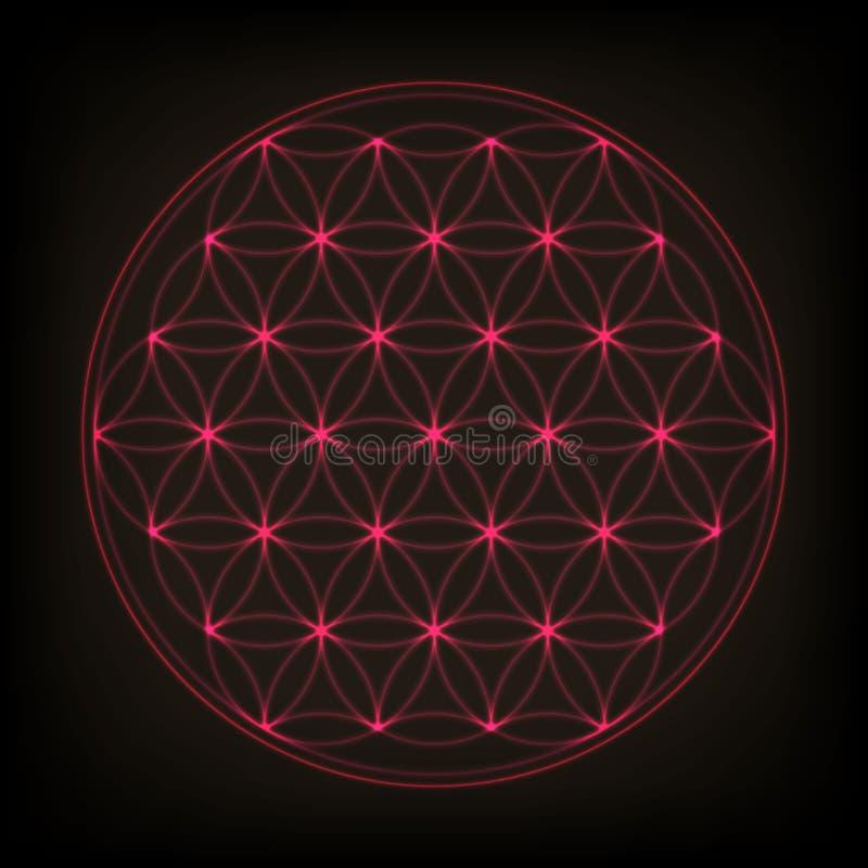 Flor de la vida Geometría sagrada, vector Ejemplo de neón rosado del vector stock de ilustración