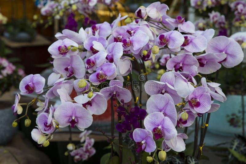 Flor de las orquídeas fotos de archivo libres de regalías
