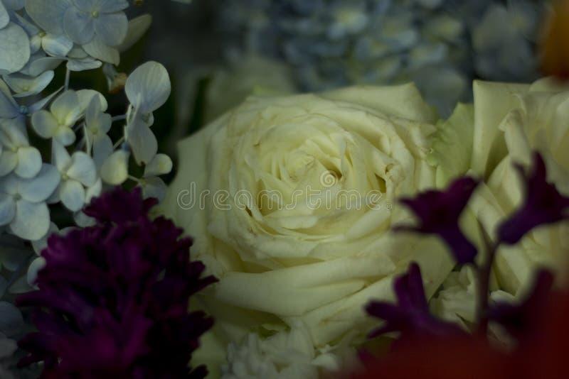 Flor de las rosas blancas imagenes de archivo
