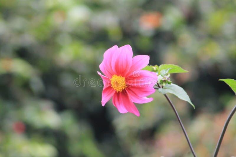 Flor de Liz stockbild
