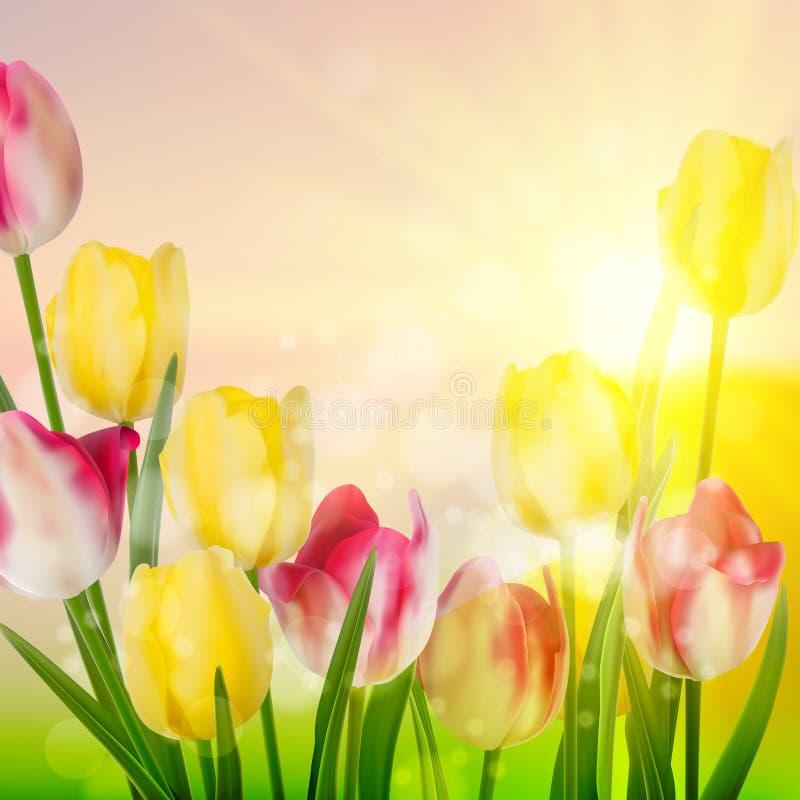 Flor de los tulipanes de la belleza de primavera. EPS 10 stock de ilustración