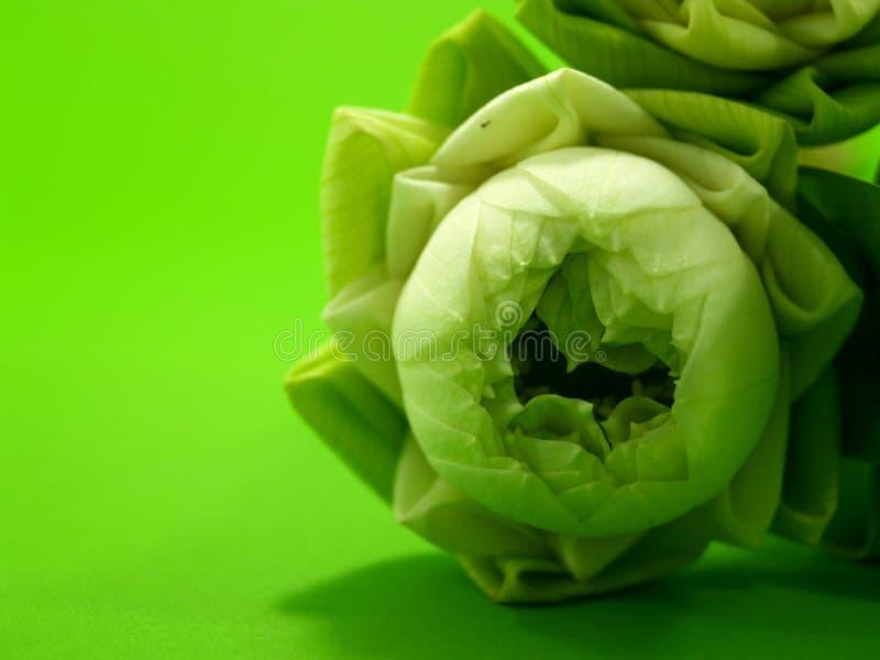 Flor de loto 2 foto de archivo libre de regalías