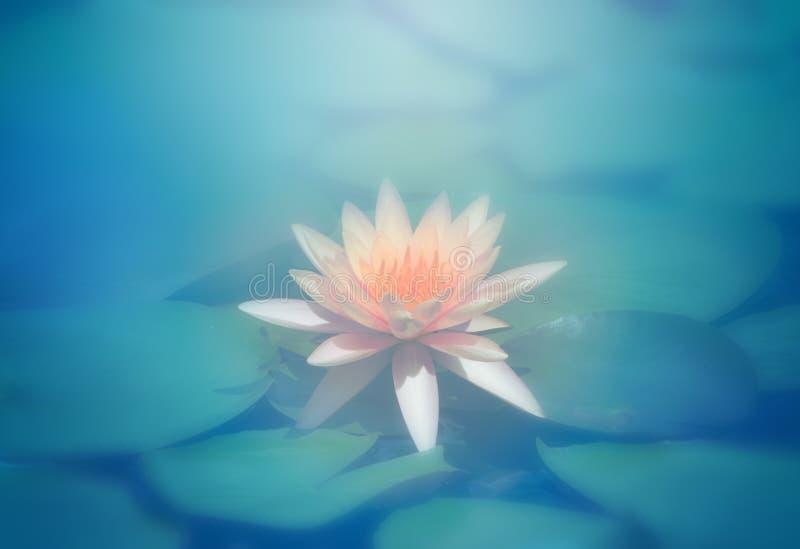 Flor de loto rosada, extracto azul stock de ilustración