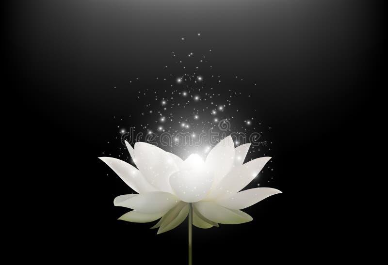 Flor de Lotus branco mágica no fundo preto ilustração royalty free