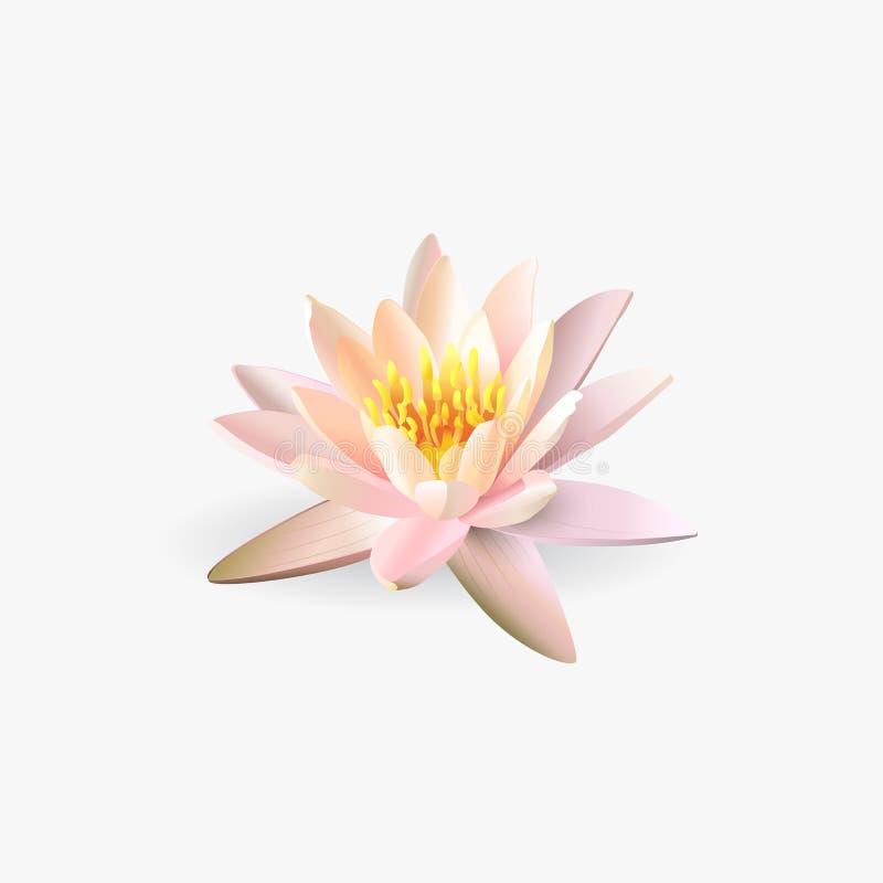 Flor de Lotus no fundo branco ilustração do vetor