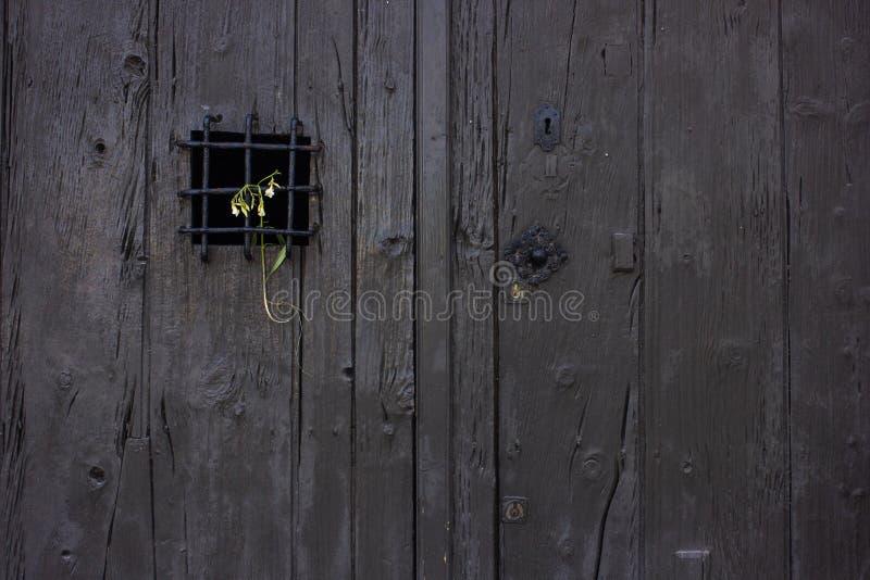 Flor de morte colocada na grade de uma porta rústica velha imagem de stock royalty free