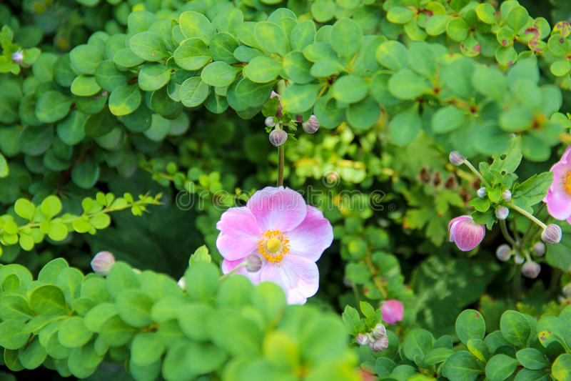 Flor de ocultación imagen de archivo