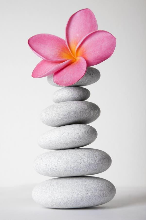 Flor de pedra da pilha e do Frangipani imagens de stock royalty free