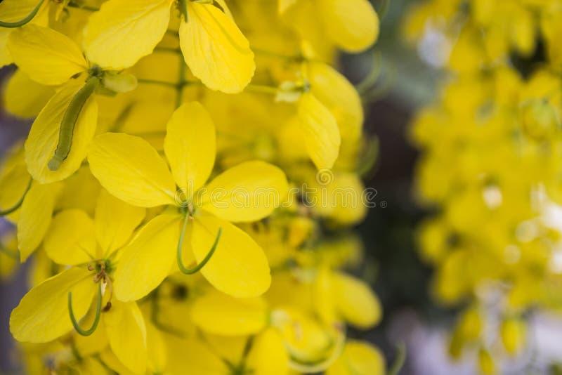Download Flor de Puddingpipe foto de archivo. Imagen de palillo - 42432380