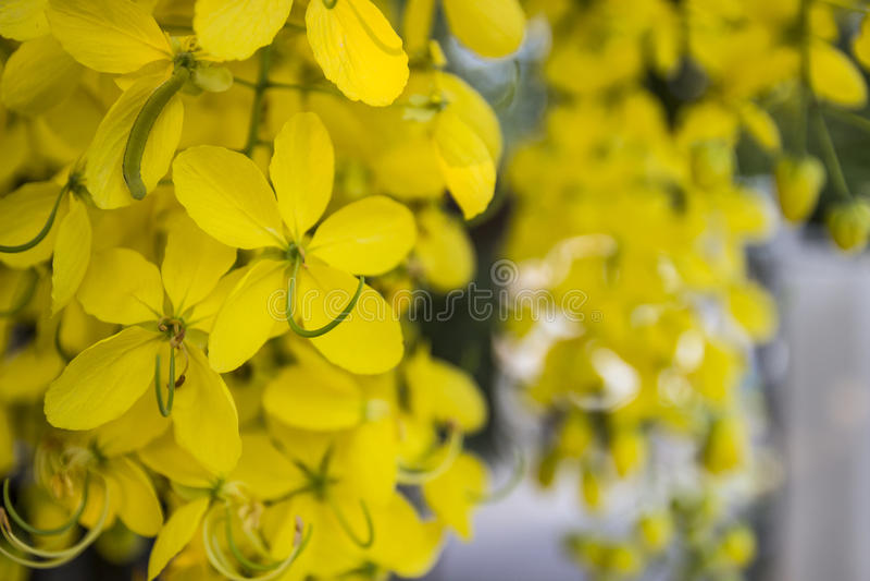 Download Flor de Puddingpipe foto de archivo. Imagen de conceptos - 42432488