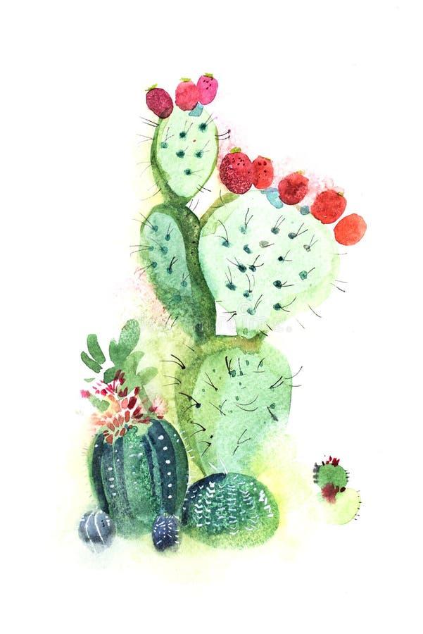 Flor de punta dibujada mano de la floración del cactus de la acuarela stock de ilustración