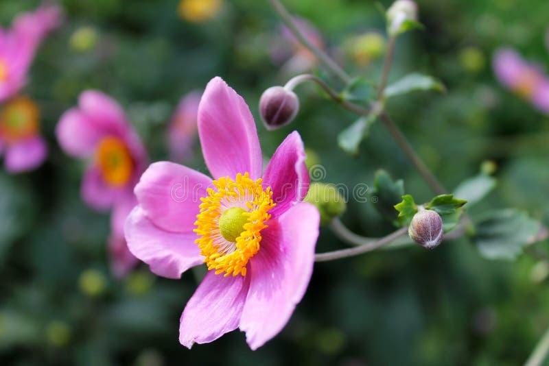 Flor de Purpur imagens de stock