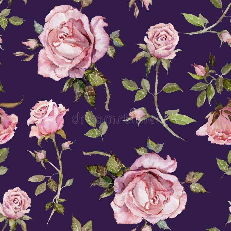 Flor de Rosa em um galho Teste padrão floral sem emenda Pintura da aguarela Ilustração desenhada mão ilustração royalty free