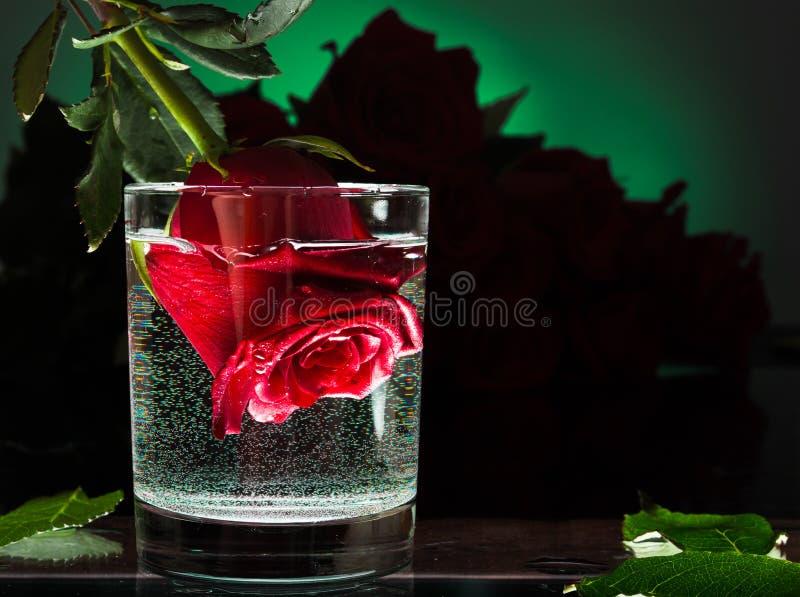 Flor de Rosa em um vidro da água Flores em um fundo azul imagens de stock