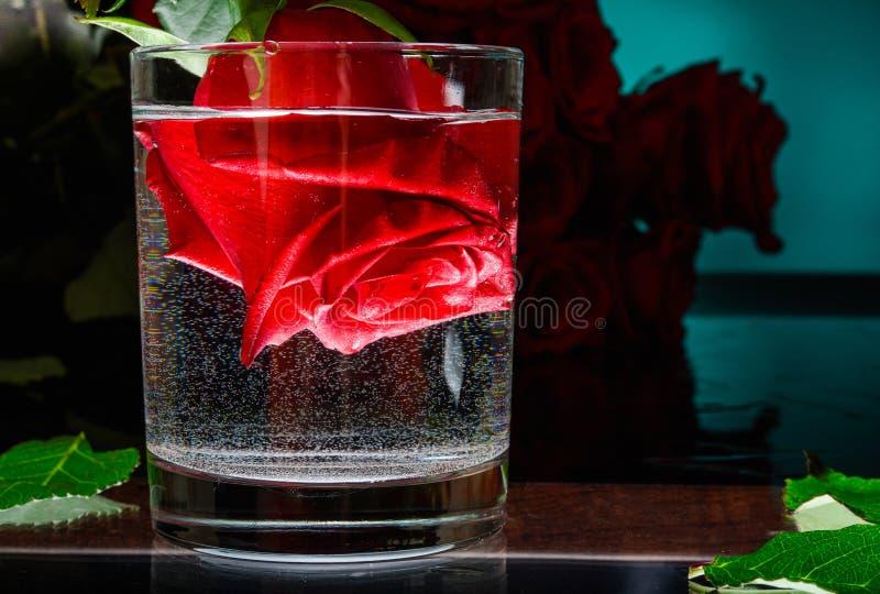 Flor de Rosa em um vidro da ?gua Noite rom?ntica imagem de stock royalty free