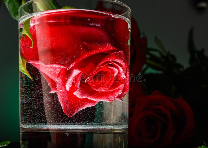 Flor de Rosa em um vidro da ?gua Noite rom?ntica imagens de stock