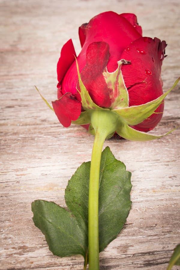 Download Flor De Rosa No Fundo De Madeira Imagem de Stock - Imagem de bonito, feriado: 65581201