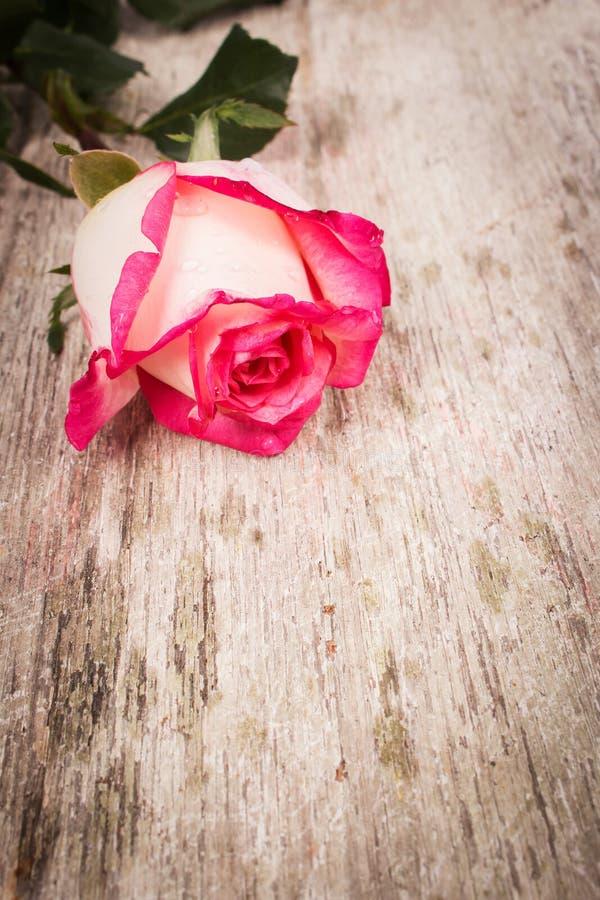 Download Flor De Rosa No Fundo De Madeira Imagem de Stock - Imagem de decoração, textura: 65581209