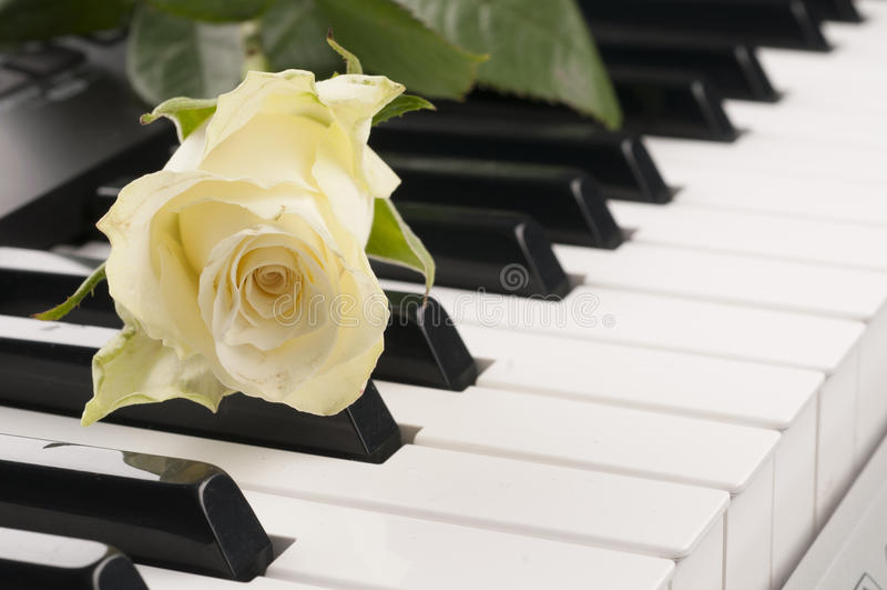 Flor de Rosa sobre o teclado de piano fotos de stock royalty free