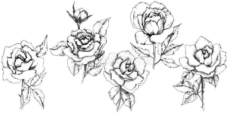 Flor de Rose en un estilo del vector Elemento aislado del ejemplo ilustración del vector