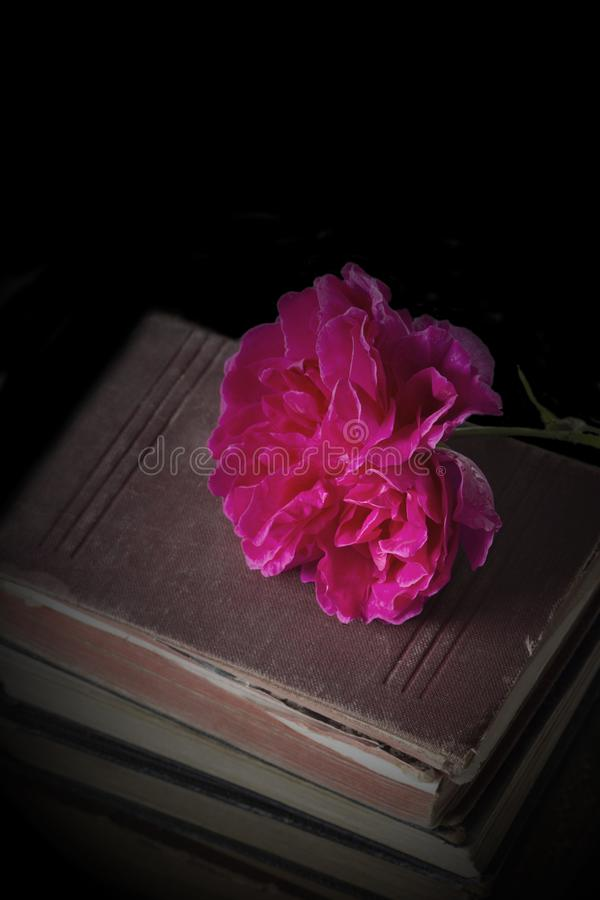 Flor de Rose encima de una pila de libros antiguos viejos imágenes de archivo libres de regalías