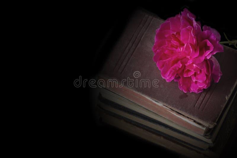 Flor de Rose encima de una pila de libros antiguos viejos fotos de archivo libres de regalías