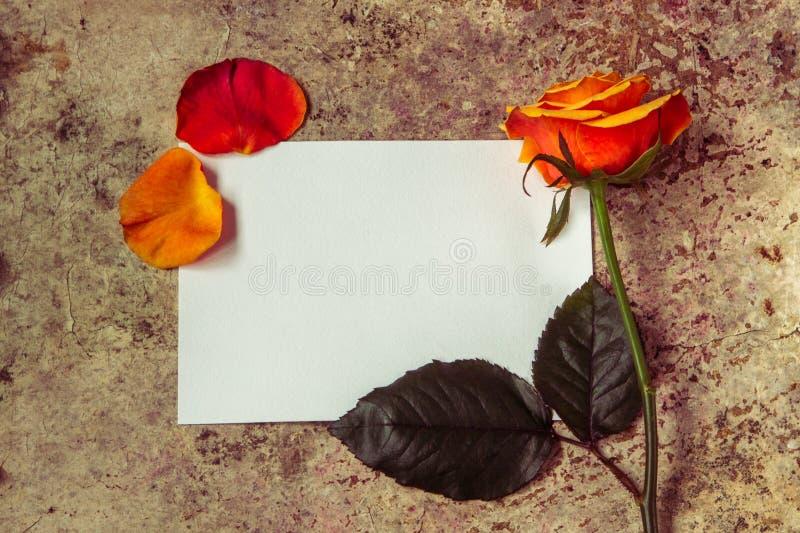Flor de Rose, pétalos y documento vacío blanco sobre un fondo de madera foto de archivo libre de regalías