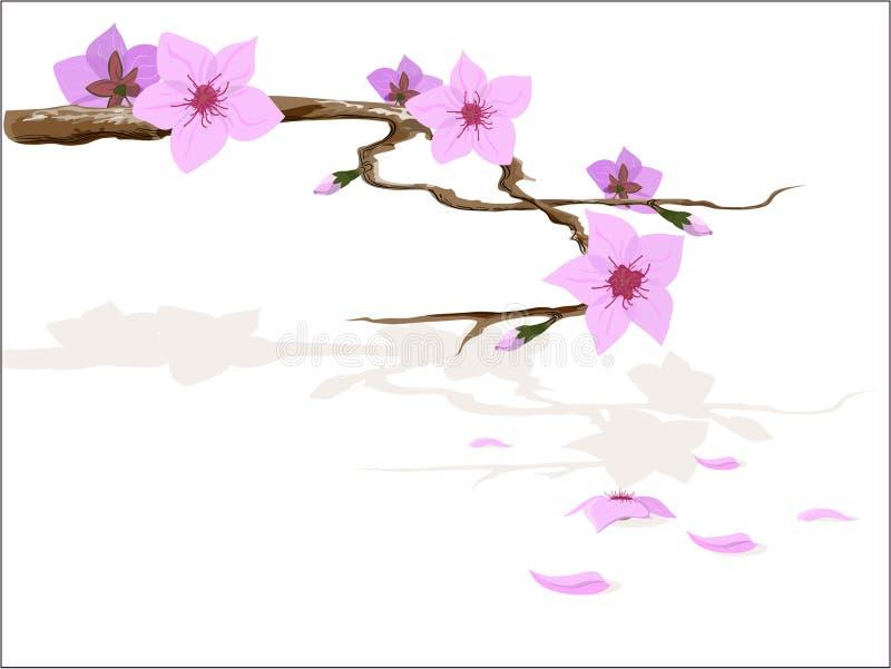 flor de sakura ilustración del vector