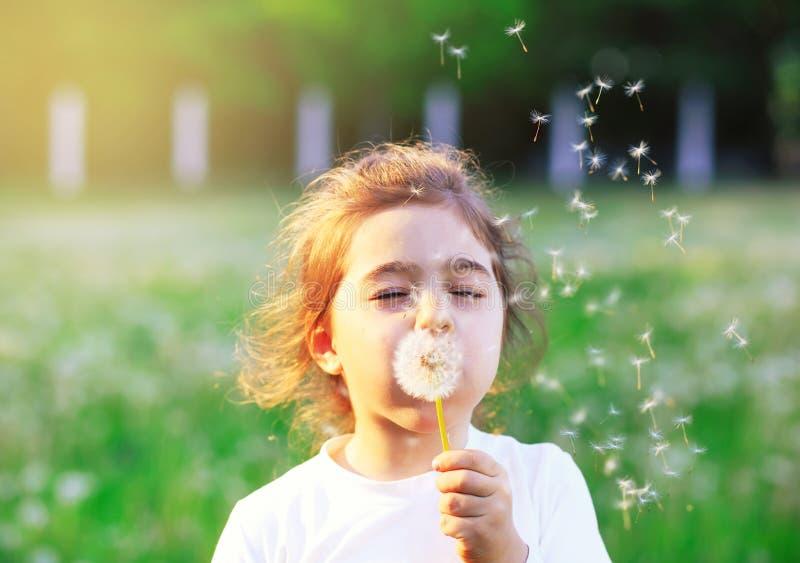 Flor de sopro do dente-de-leão da menina bonita no verão ensolarado p fotos de stock