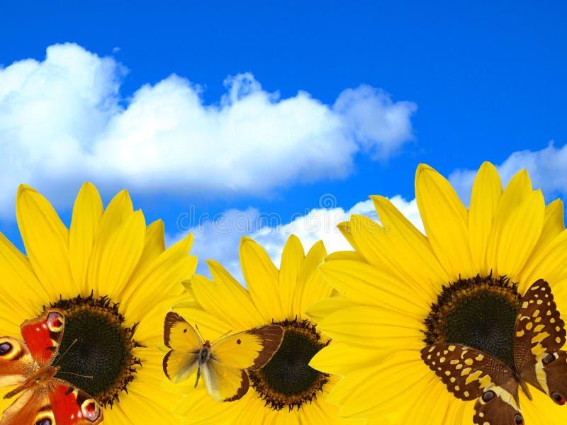 Flor de Sun con las mariposas en fondo del cielo fotografía de archivo